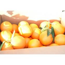 Naranja Zumo 20 kg., Palma del Rio